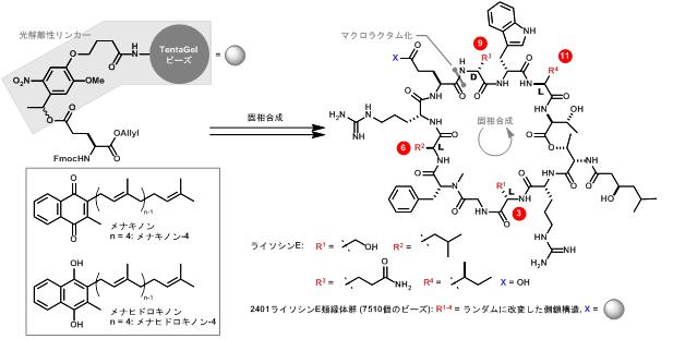 ペプチド系抗生物質のアップグレード~天然物の構造に基づく新規人工 ...